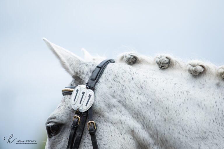hevosen kokoaminen